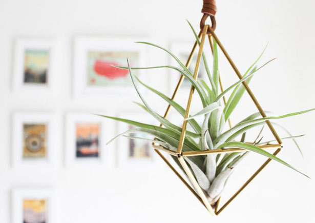 Plantas must-have para interiores